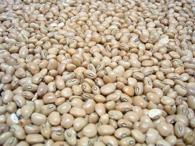 odrůda fazolí nevhodná ke klíčení